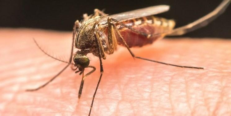 قارچ سمی قاتل پشه های مالاریا