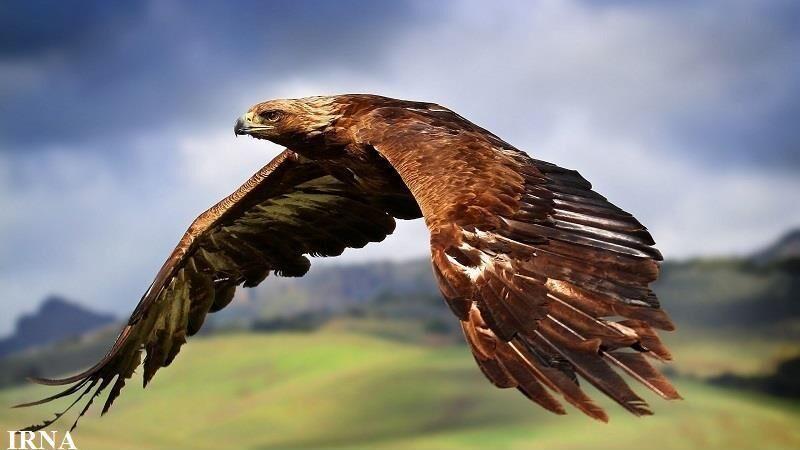 خبرنگاران بازگشت 27 پرنده شکاری به آسمان همدان